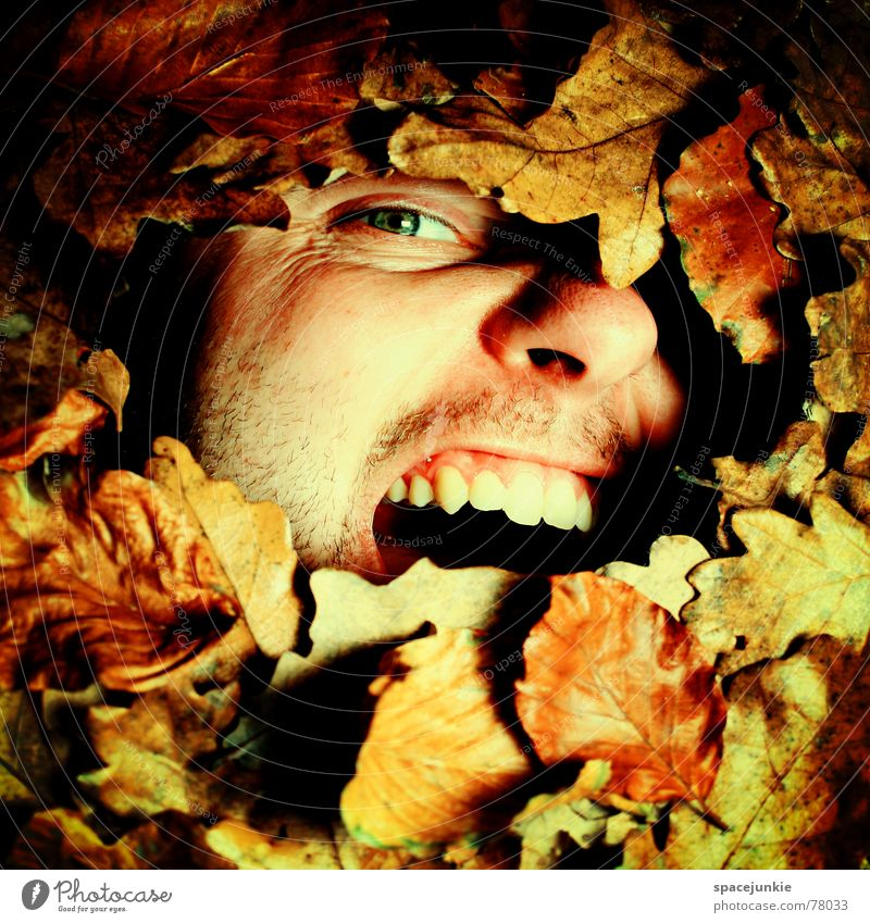 An Autumn Writing Picture Leaf Scream Man Bury Captured Freak Autumn leaves Seasons Old Face Fear Nature Like