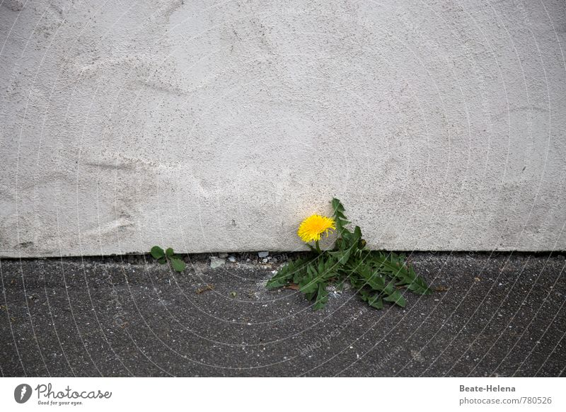 Green Plant White Loneliness Yellow Healthy Eating Wall (building) Wall (barrier) Stone Growth Power Authentic Poverty Simple Force Blossoming
