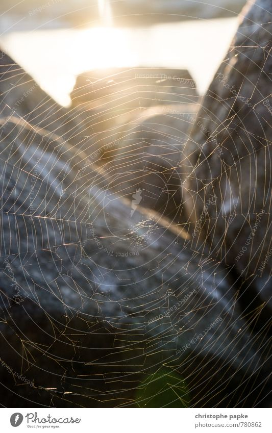 Full network coverage Sunrise Sunset Sunlight Stone Catch Hang Spider's web Spin Net Network Reticular Connection Woven Structures and shapes Nature