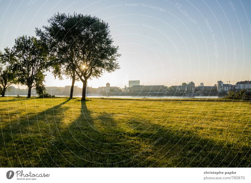 Sunrise on the Rhine Environment Nature Landscape Cloudless sky Sunset Sunlight Beautiful weather Tree Park Meadow River bank Duesseldorf Germany Town