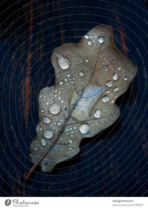 autumn tears Leaf Wood Thread Wet Reflection Dew Black Damp Dark Drop shadow Drops of water Flow Thaw Liquid Grief Autumn Gray Brown Brittle Multiple Grave Lose