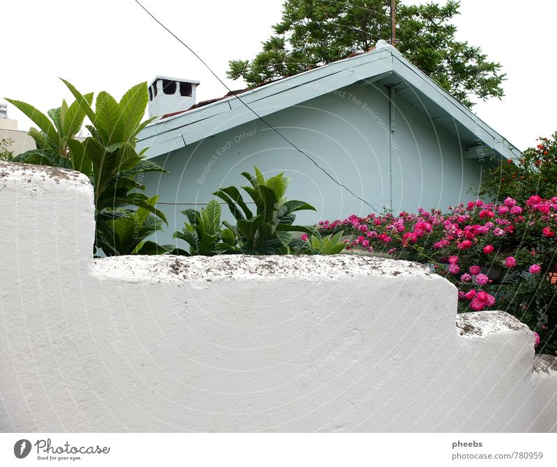 picture book house House (Residential Structure) Roof Wall (building) Living or residing Mint green Light blue Pastel tone Flower Street Wall (barrier) Behind