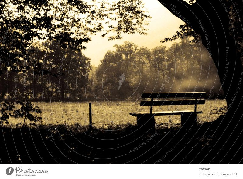 Nature Summer Relaxation Romance Bench Vantage point Vintage