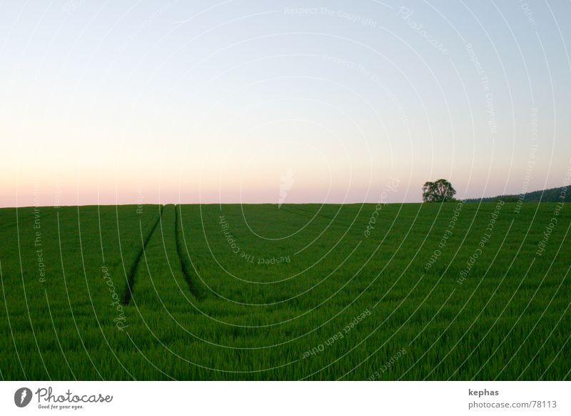 Sky Tree Green Loneliness Far-off places Landscape Field Horizon Grain Beautiful weather Dusk
