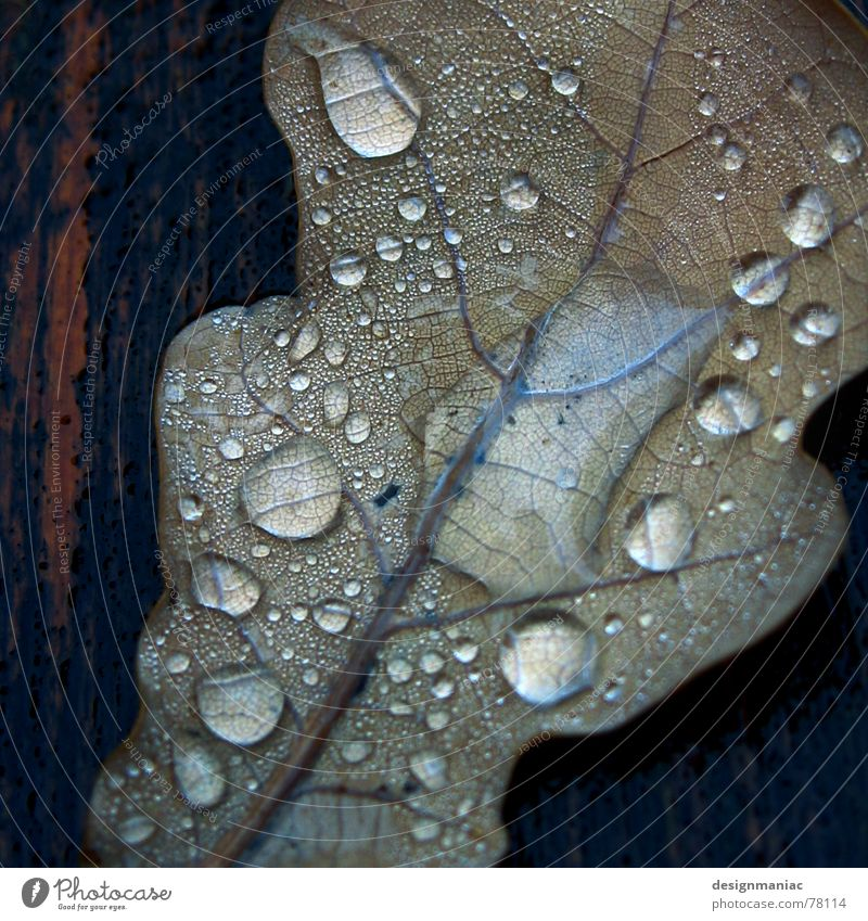 cold and damp Leaf Wood Thread Wet Reflection Dew Black Damp Dark Drop shadow Drops of water Flow Thaw Liquid Grief Autumn Gray Brown Brittle Multiple Grave