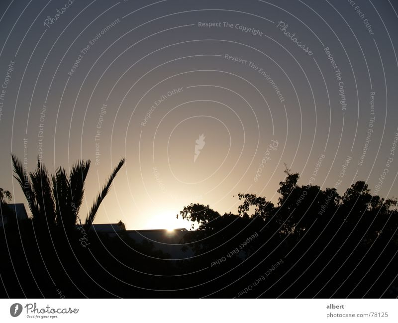 almost dark Sunset Palm tree Dark Sunrise Twilight Blue sky Evening