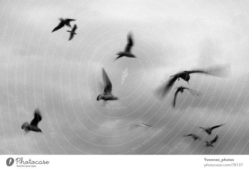 fly away with me... Bird Seagull Clouds Speed Dark Gray Grief Black White Far-off places Longing Moody Ocean Light Horizon Flock of birds Sky seagulls Flying