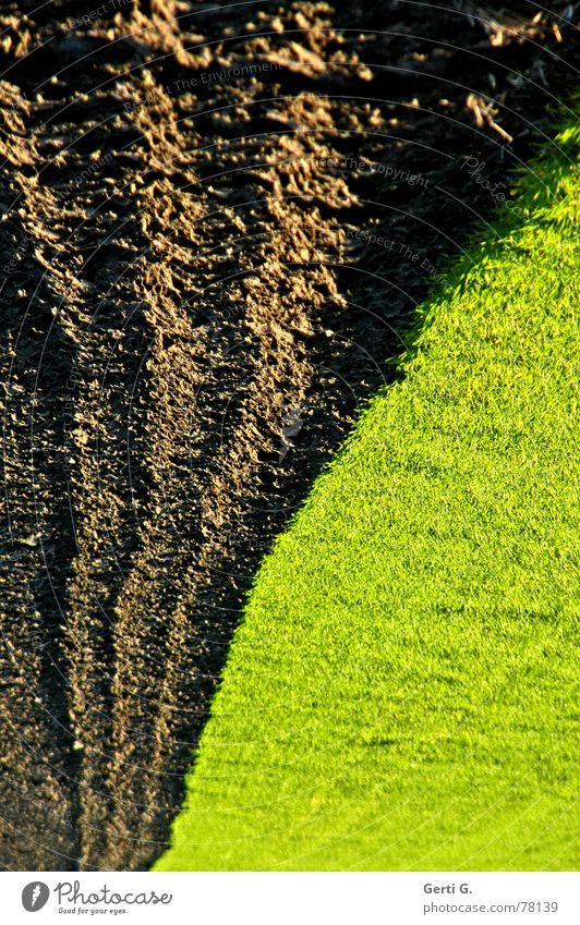 Green Autumn Meadow Grass Brown Line Earth Field Dirty Earth Speed Stripe Clean Touch Lawn Agriculture