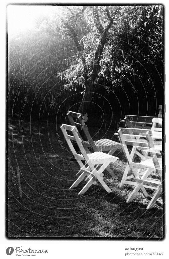 o.t. Garden chair Tree Light Back-light Dream Moody Black & white photo Rain Sun Summer
