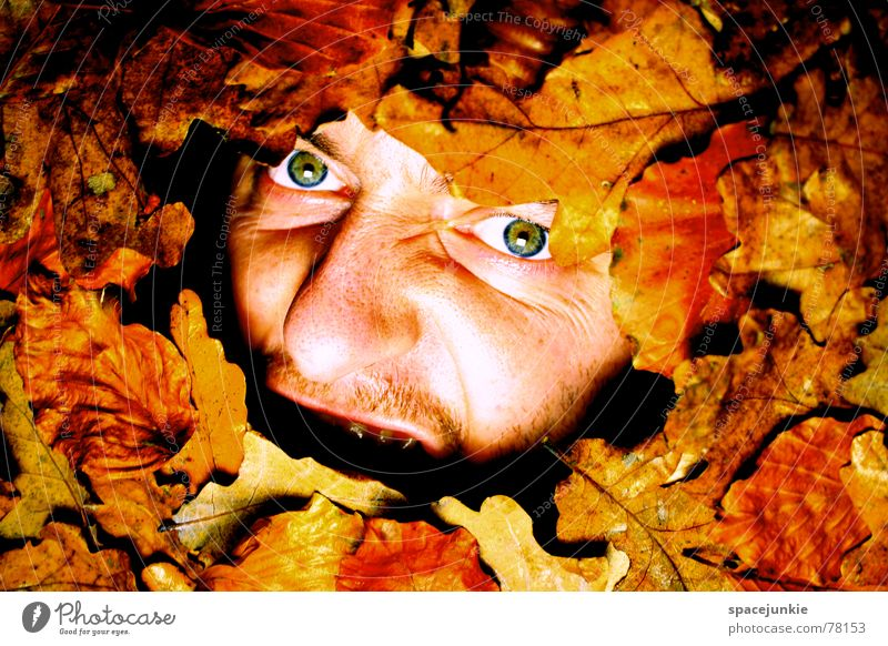 Man Nature Old Face Leaf Autumn Fear Scream Seasons Captured Freak Autumn leaves Like Bury