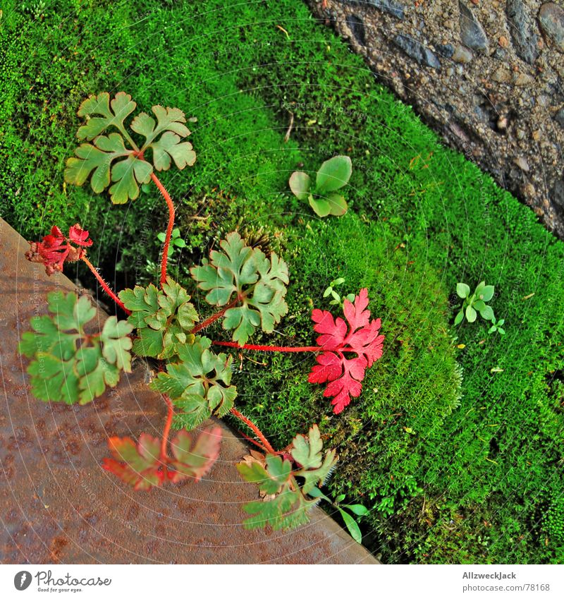 Nature Green Plant Autumn Concrete Steel Moss Diagonal Autumnal Plantlet Medicinal plant Weed