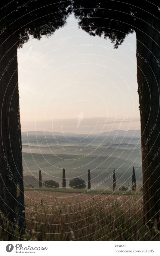 Gateway to Tuscany Vacation & Travel Tourism Trip Far-off places Freedom Summer Summer vacation Italy Nature Landscape Sky Fog Tree Bushes Cypress Meadow Hill