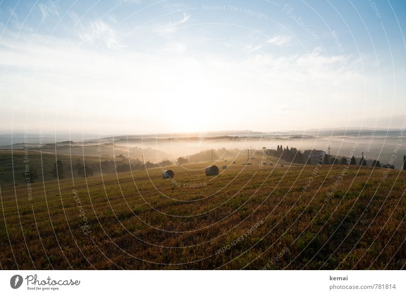 early morning mist Environment Nature Landscape Air Sky Clouds Sunrise Sunset Sunlight Summer Beautiful weather Fog Tree Foliage plant Agricultural crop Cypress