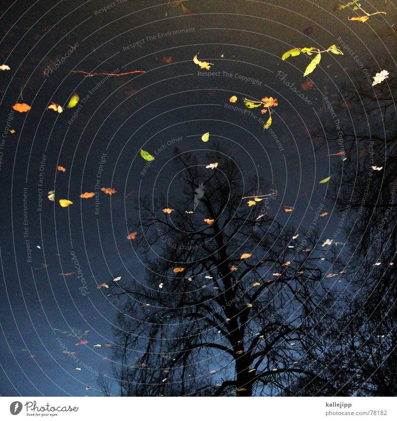 Sky Tree Leaf Clouds Cold Autumn Death Lake Park Warmth Flying Putrefy Physics Gale Stuttgart November