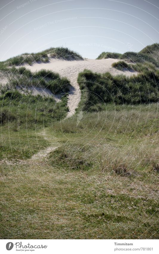 Nature Vacation & Travel Green Plant Summer Calm Environment Emotions Coast Natural Esthetic Simple Footpath Dune North Sea Accuracy