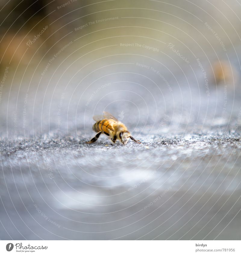 bee Bee 1 Animal Stone Esthetic Small Positive Nature Colour photo Exterior shot Deserted Copy Space top Copy Space bottom Day Shallow depth of field
