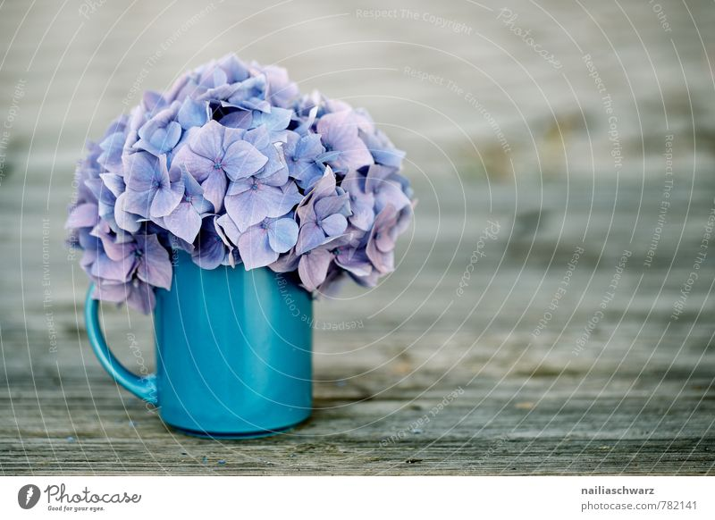 hydrangeas Cup Mug Style Garden Table Flower Blossom Wood Old Retro Soft Blue Brown Violet Spring fever Romance Pure Hydrangea horstensia blossom sitllife