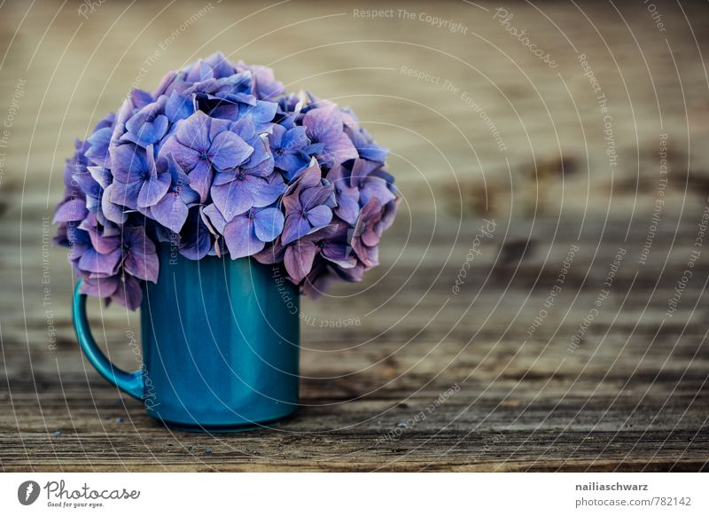 hydrangeas Cup Mug Style Garden Table Flower Blossom Wood Old Natural Retro Beautiful Soft Blue Brown Violet Spring fever Warm-heartedness Romance Fragrance
