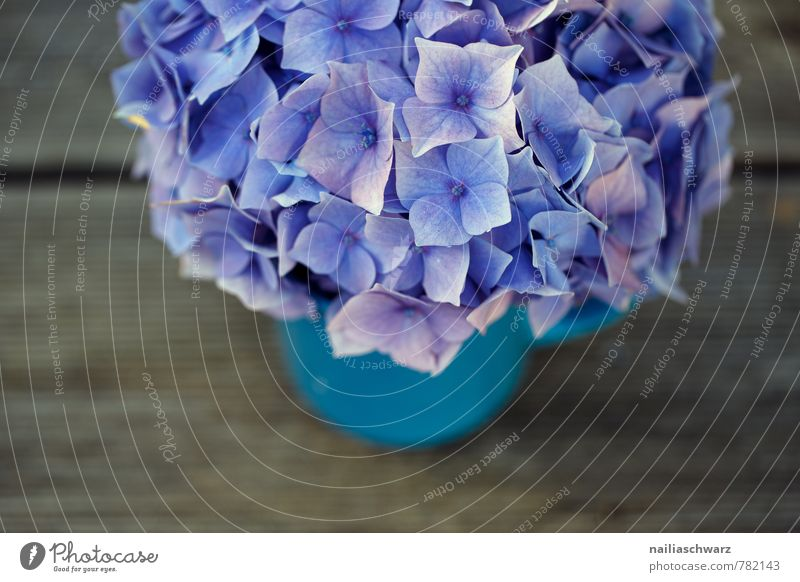 Blue Old Colour Flower Blossom Style Wood Happy Garden Brown Happiness Table Soft Retro Romance Violet