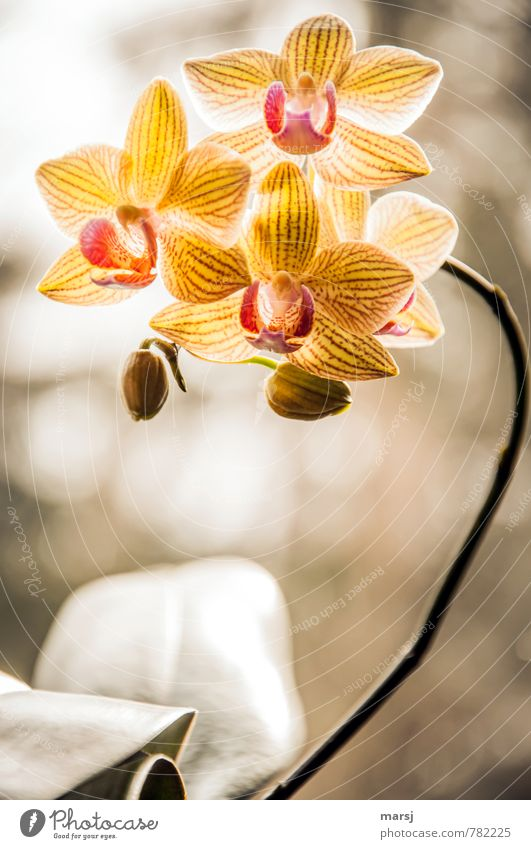 They're glowing! Plant Tree Orchid Blossom Blossoming Illuminate Colour photo Multicoloured Interior shot Close-up Macro (Extreme close-up) Pattern Deserted