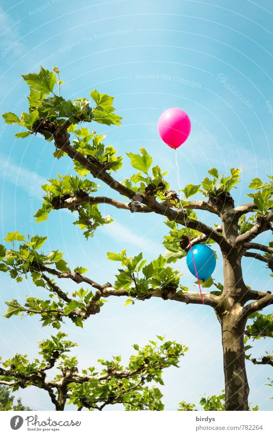 Balloon tree the second Sky Spring Summer Beautiful weather Tree American Sycamore Illuminate Above Positive Blue Green Pink Joy Joie de vivre (Vitality)