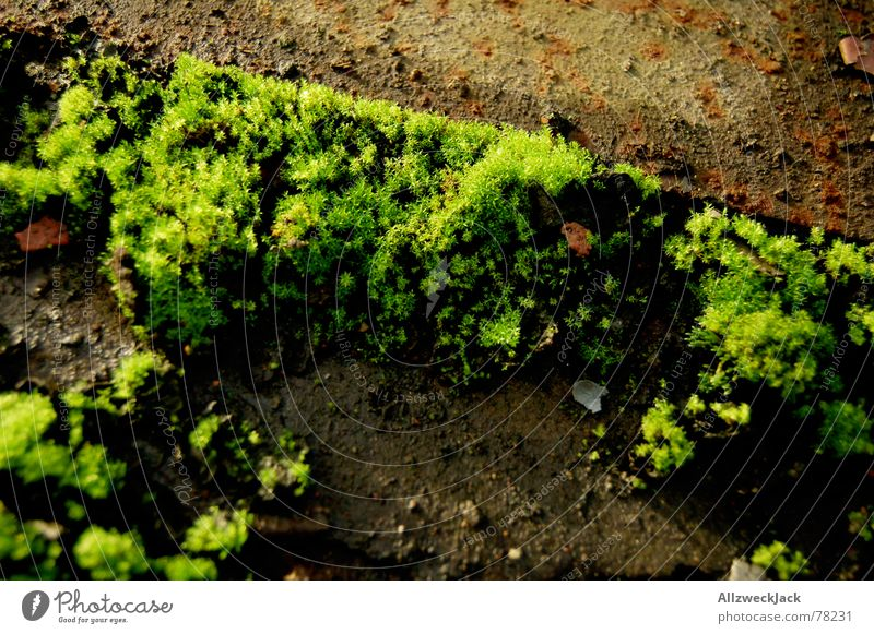 Nature Green Stone Floor covering Rust Moss