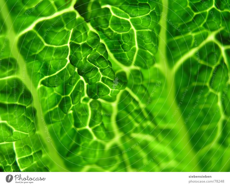 fresh Authentic Ecological Pure Vitamin Composing Plant Unprocessed Living thing Botany Food Raw Part of the plant Nutrition Vigor Life Ethnic Fresh