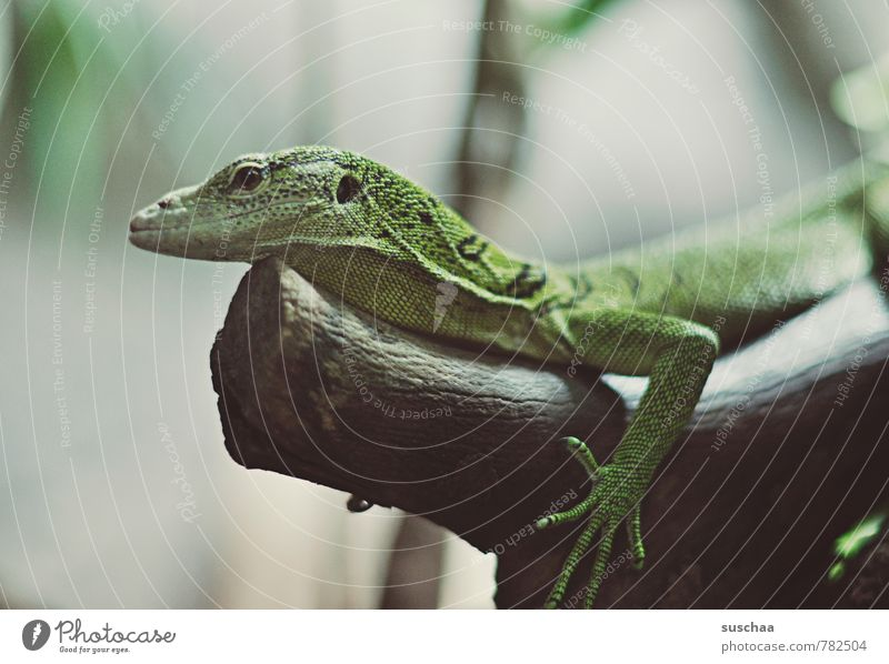a little green animal Animal Animal face Claw 1 Wood Exotic Cute Green lizard Reptiles Zoo Tree trunk Scales Colour photo Detail Copy Space left