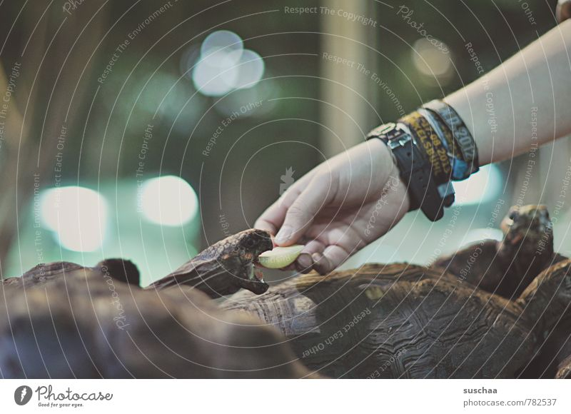 predator feeding Arm Hand Fingers Scales Zoo Group of animals To feed Feeding Cute Appetite Voracious Muzzle Tank Reptiles Turtle Subdued colour Interior shot