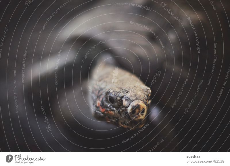 toad Animal Animal face 1 Old Reptiles Tank Turtle Subdued colour Interior shot Copy Space left Copy Space right Copy Space top Neutral Background
