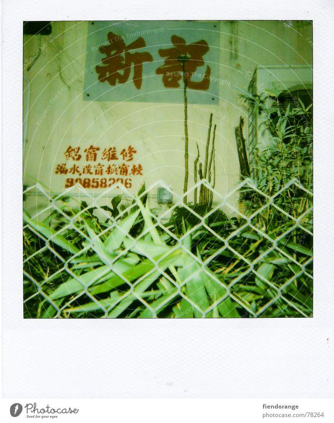 zaungast Fence Hongkong Green Leaf Cantonese flower street Sign Polaroid