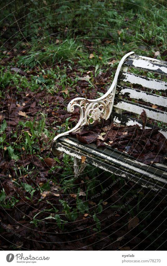 Plant Green White Tree Loneliness Leaf Calm Winter Dark Autumn Death Garden Rain Park Bushes Crazy