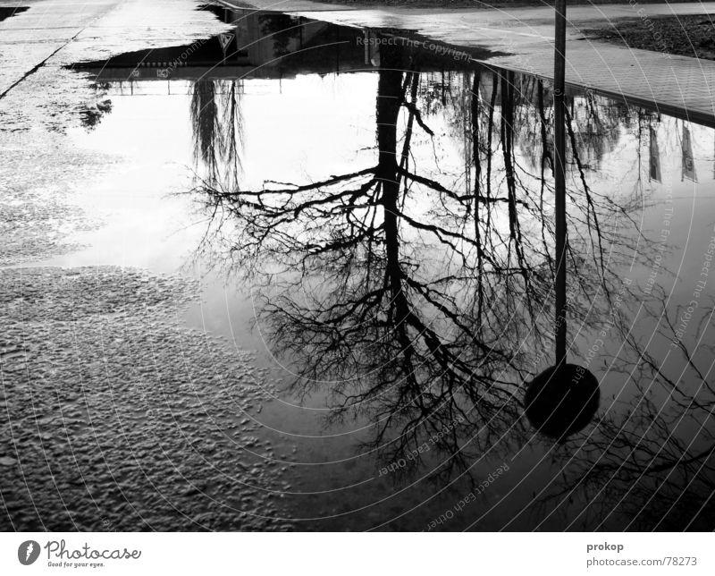 Passage = broken Autumn Puddle Street sign Reflection Sidewalk Black White Calm