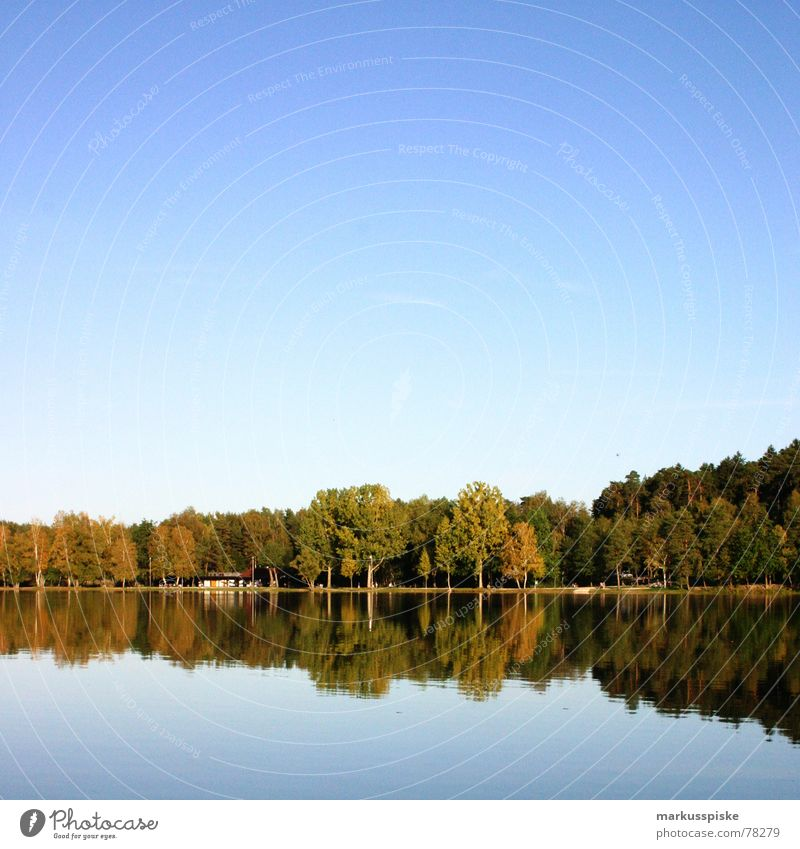 Nature Sky Tree Sun Blue Forest Meadow Wood Lake Branch Idyll Tree trunk Beautiful weather