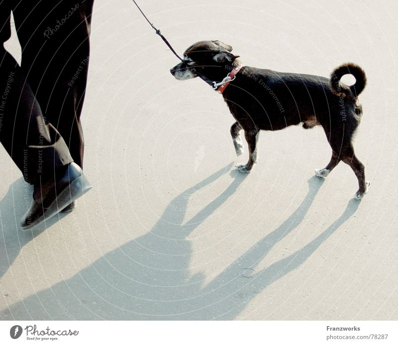 ...Shadowfall... Dog Swagger Going Scurry Tails Small Walk the dog To go for a walk Rope Legs Elegant Street Lanes & trails