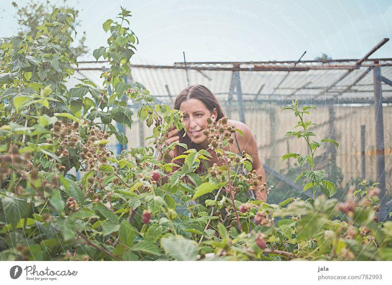 raspberries Human being Feminine Woman Adults 1 30 - 45 years Environment Nature Plant Sky Summer Bushes Agricultural crop raspberry bush Raspberry Garden