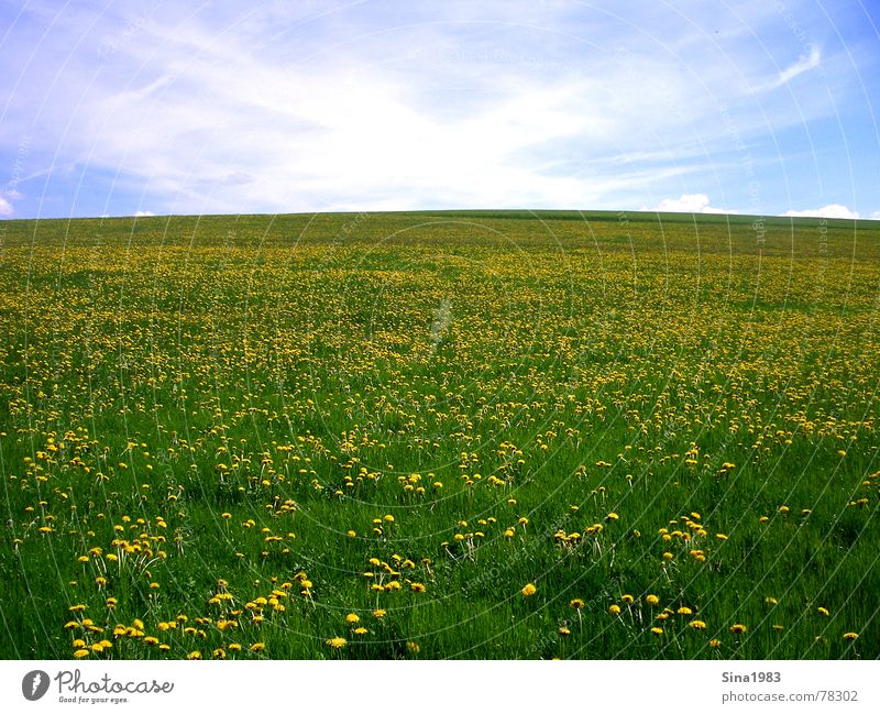 Nature Sky White Flower Green Blue Summer Clouds Yellow Far-off places Meadow Spring Horizon Infinity Blossoming Dandelion