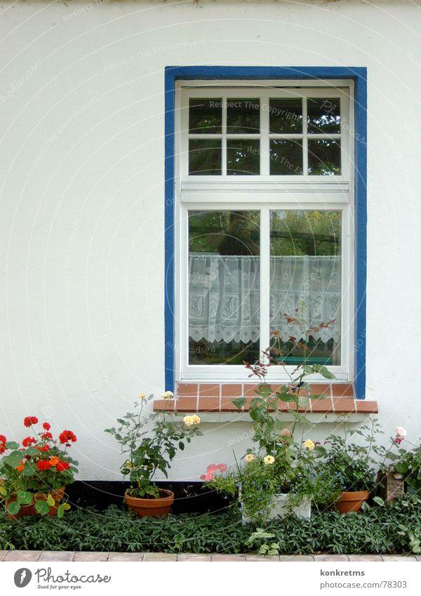 island view Window Flower Flowerpot Farm Rügen Hiddensee Still Life Cozy Exterior shot Blue no special illumination