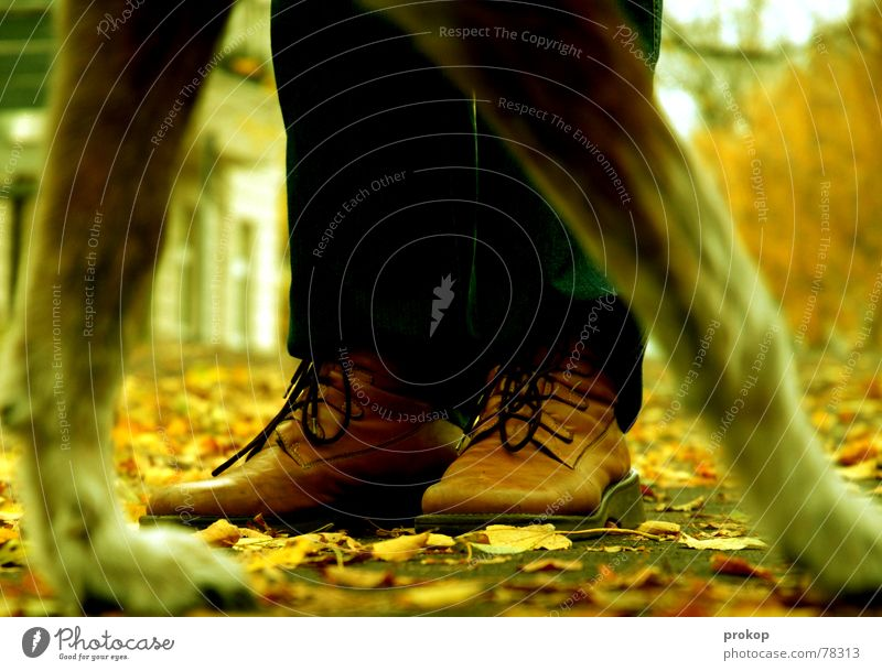 Hyenas in the city park Dog Footwear Boots Leaf Autumn Park Stand Shoelace Paw Beast Wolf Hyaena Dangerous Lanes & trails Threat To go for a walk shoes leaves
