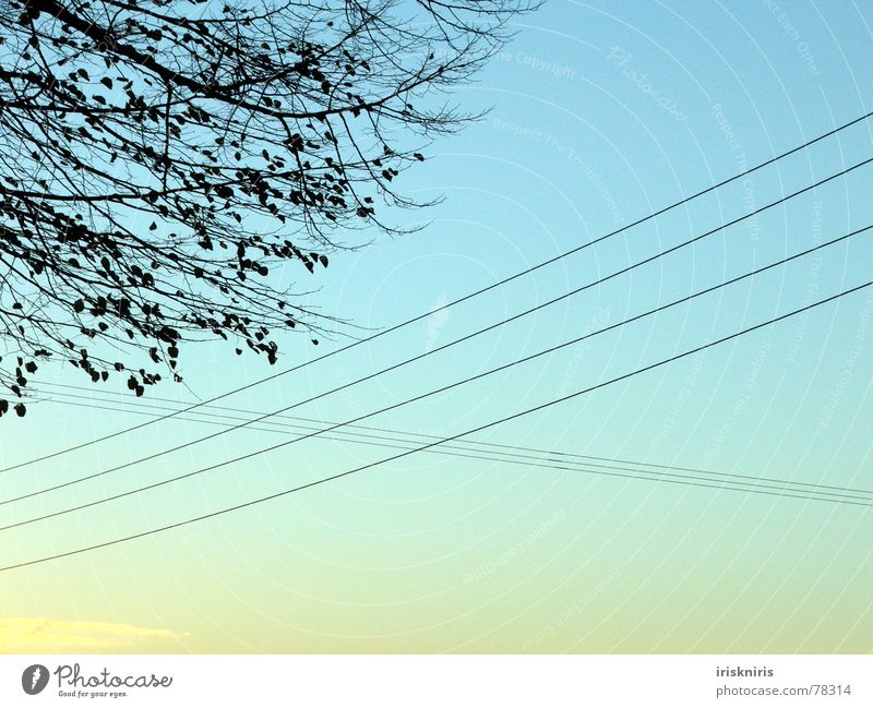 Nature Tree Leaf Cold Autumn Air Electricity Cable Wire Mixture Dusk Transmission lines Crossed