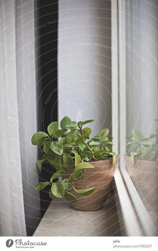 Beautiful Plant Window Natural Flat (apartment) Living or residing Decoration Esthetic Simple Drape Flowerpot Foliage plant Window board Houseplant Pot plant