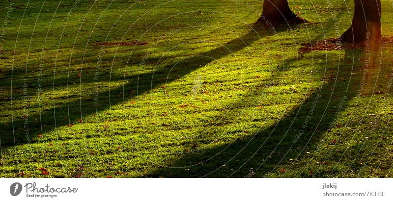 Tree Green Autumn Meadow Grass Garden Park Growth Afternoon Plant Patch of light