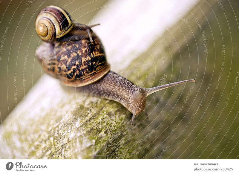 Two snails Garden Nature Animal Grass Park 2 Group of animals Pair of animals Old Crawl Large Small Green Goodness Help Tolerant Comfortable Attachment