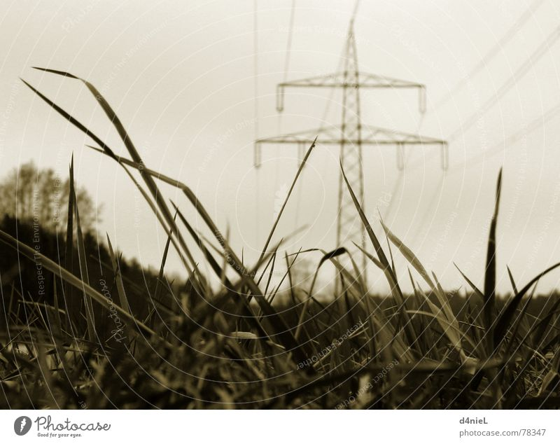 Nature Sky Calm Autumn Meadow Grass Industry Hope Electricity Technology Cable Electricity pylon Transmission lines Electronic Sepia Electronics