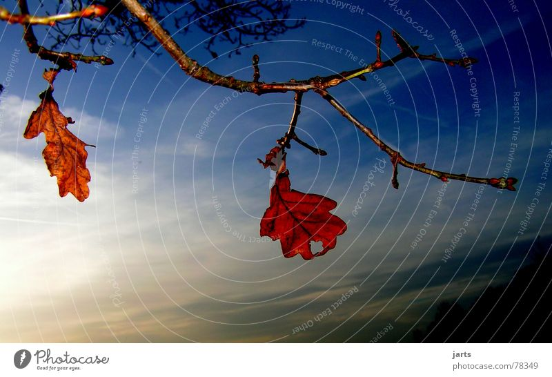 two alone Forget Leaf Autumn Tree Clouds Loneliness Sky Evening Branch jarts
