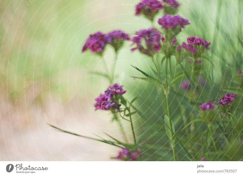 Nature Plant Beautiful Flower Environment Grass Blossom Garden Esthetic