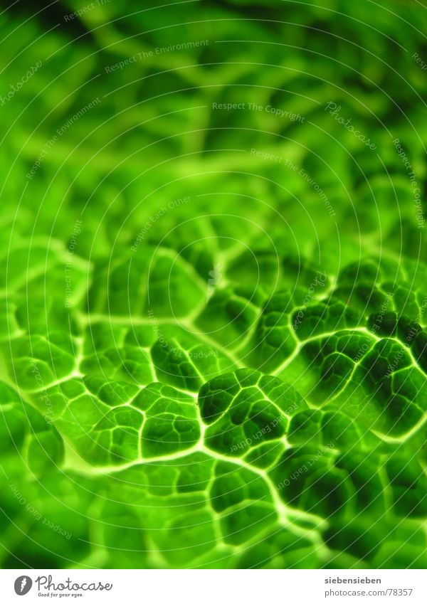 green Fresh Macro (Extreme close-up) Close-up Background picture Green Plant Multicoloured Blur Authentic Ecological Pure Vitamin Composing Vegetable
