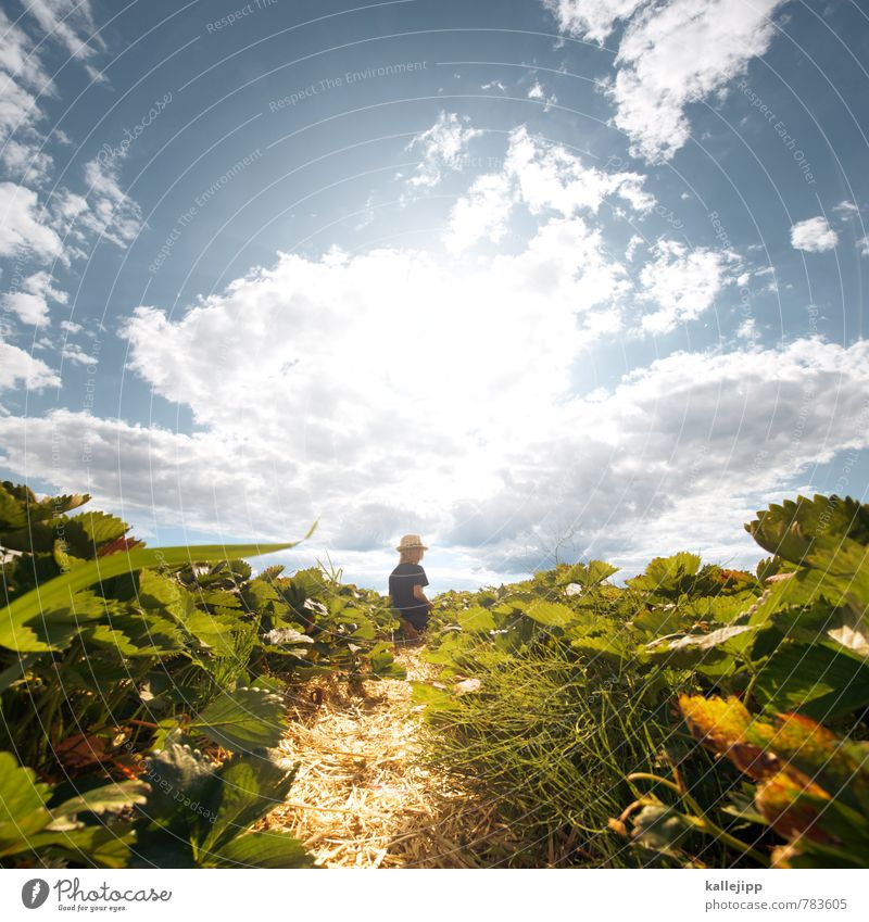 Human being Sky Child Nature Plant Summer Sun Landscape Clouds Leaf Animal Environment Boy (child) Field Growth Infancy