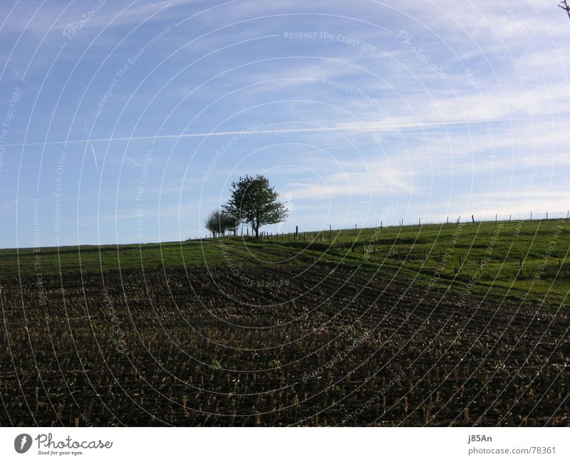 stubble field Stubble field Field Tree Green Brown Meadow Clouds Exterior shot Lanes & trails Landscape Blue Freedom