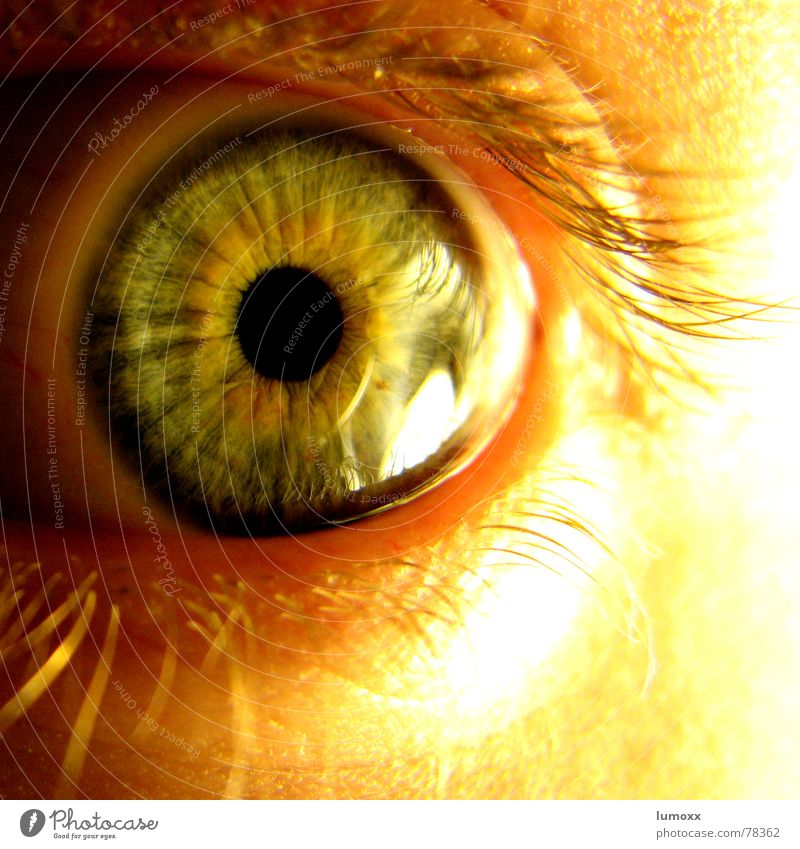 the all seeing I Skin Human being Eyes Observe Discover Glittering Yellow Gold Green Black Fear Horror Pupil Self portrait Vision Iris Panic Beautiful Snapshot